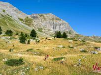 Trail ©Rémi MOREL - OT Vars